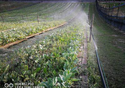 irrigazione allevamento lumache