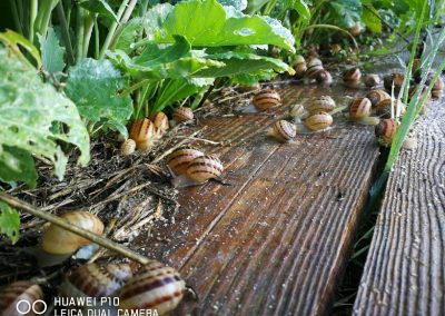 lumache a spasso sulle tavole di legno