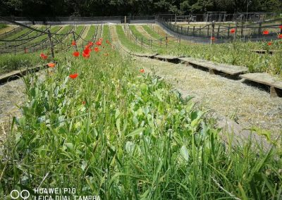 allevamento lumache vegetazione